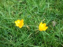 Blumen im Gras