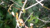 Spinnennetzt im Wald