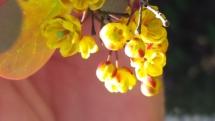 Gelb-rote Blüte